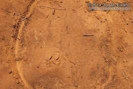 Dove Tracks