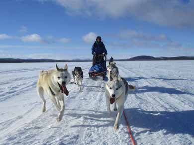 Northern Lights Dog Sledding in Lapland