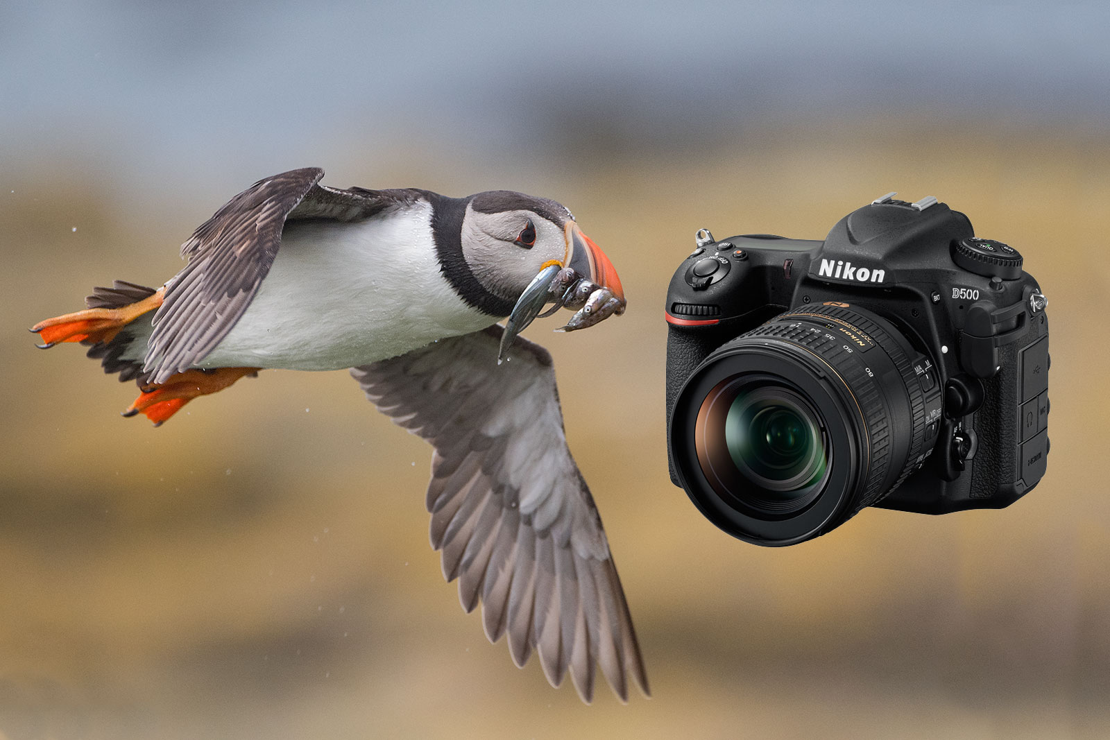 Nikon D500 Review In The Hands Of A Wildlife Photographer