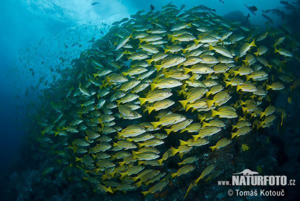 Fisch Bilder Fisch Fotos NaturFoto