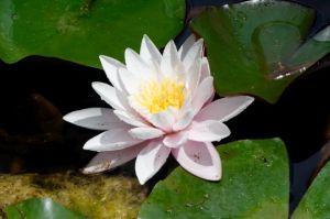 Gesichtsbehandlungen für Lotushaut