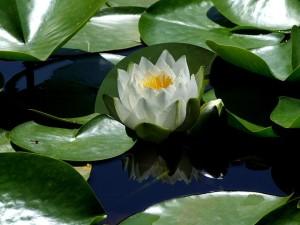 flower-190867_640