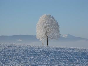 winter-198447_640