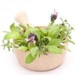 Plantas Medicinales: de la Brujería a la Ciencia