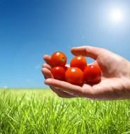 Naturaleza: Cómo afecta a nuestra Salud