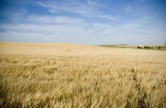 Cereales: básicos para nuestra alimentación