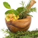 Directiva UE prohibe parte de los Remedios Herbales Tradicionales