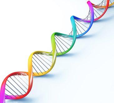 DNA o ADN