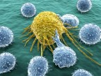 Bacterias y Virus, esos bichitos que nos enferman