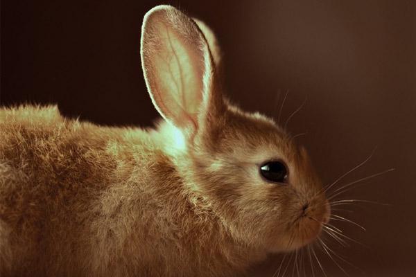 Coniglio Animale Da Compagnia Contro La Solitudine