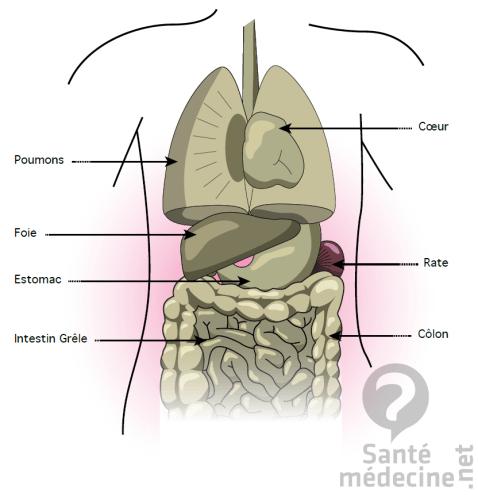 L'émonctoire foie-intestins