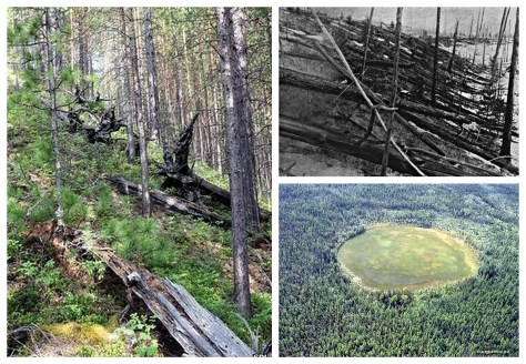 A photographic collage showing the lasting aftermath of the Tunguska event on the local environment.