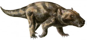 An artist's impression of a Cynognathus - an extinct genus of large-bodied cynodont therapsid that lived in the Early and Middle Triassic.