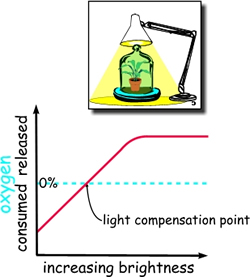 """A graph and a drawing describing the so-called """"light compensation point""""."""