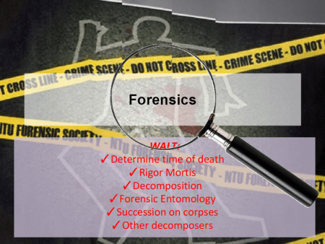 """A photomontage showing a body outline, """"Do Not Cross"""" yellow police tape, and a magnifier focused on the word """"Forensics"""". The picture also lists the following forensic ways to estimate the time of death - Wait: Determine the time of death; Rigor mortis; Decomposition; Forensic Entomology; Succession on corpses; Other decomposers."""