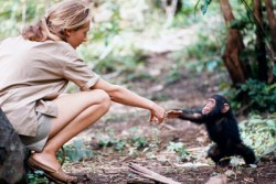 A photograph showing Jane Goodall with an Infant chimp.