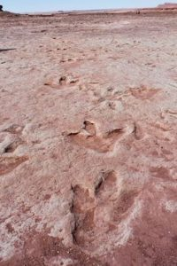 A photograph showing the famous dinosaur footprint impressions at An Corran, Staffin on the Isle of Skye in Scotland.