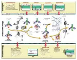 A diagram explaining the molecular toxicology of organophosphorus poisons. Source: Medical Corps International Forum