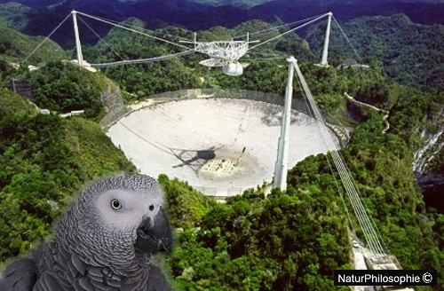 An aerial photograph showing the Arecibo Observatory telescope. The dish reflector of the telescope is built into a valley in the landscape, and the feed antenna is suspended by cables above it. Since the reflector can't be moved, the telescope is steered to point at different regions of the sky by moving the feed antenna $ ($in bell shaped dome$ )$ along on a curving track. The dome shields the feed antenna from interfering radio signals. Image: NaturPhilosophie