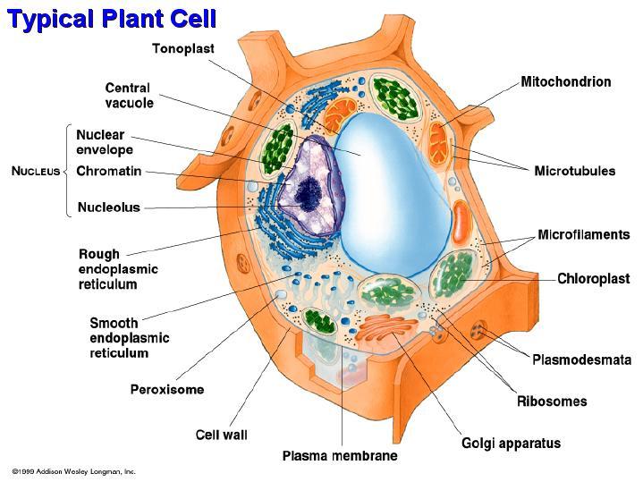 Life Under The Microscope - NaturPhilosophie