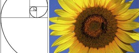 Fibonacci's Golden Spiral – The Relationship between Maths and Nature