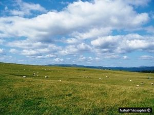 A photograph of stratocumulus over the Scottish countryside. Image: NaturPhilosophie