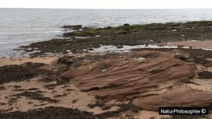 A photograph of the rocky shore between Seamill and Portencross in Scotland, showing an outcrop of old red sandstone. Photograph: NaturPhilosophie