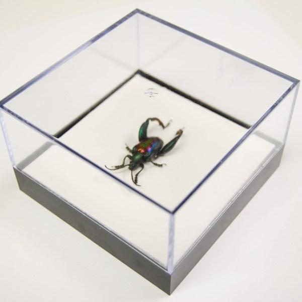 L Box Sagra buquetti