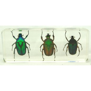 3 green chafer beetles