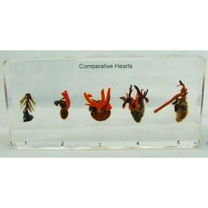 Comp Hearts