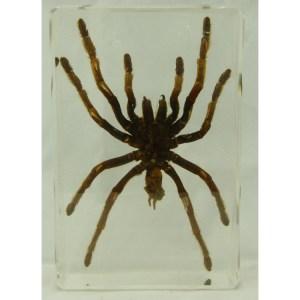 Tarantula large