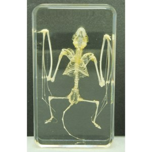 small bat skeleton