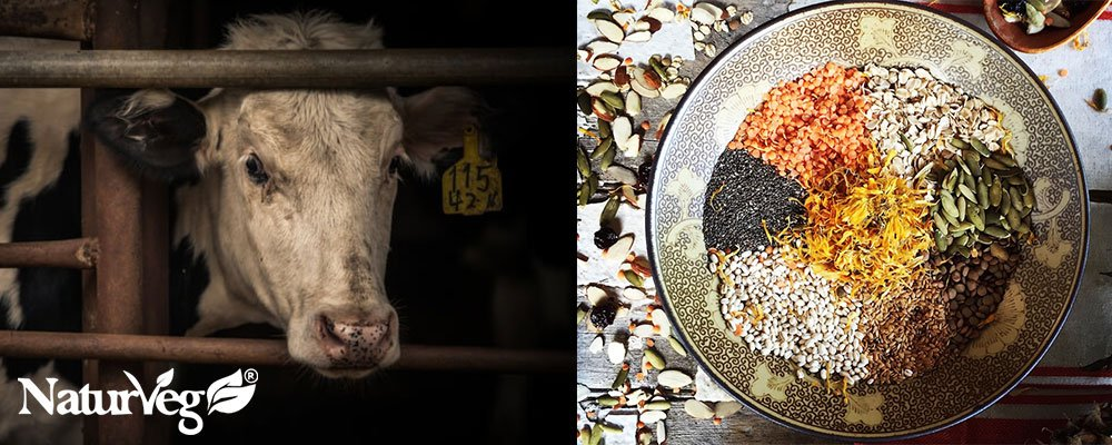 Proteine Vegetali o Animali?