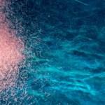 Krill dono dal mare