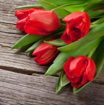 Red tulips over wooden table. Valentines day background. View with copy space
