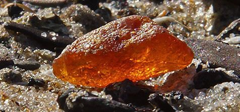 Amber, found on Texel beach by photographer Sytske Dijksen