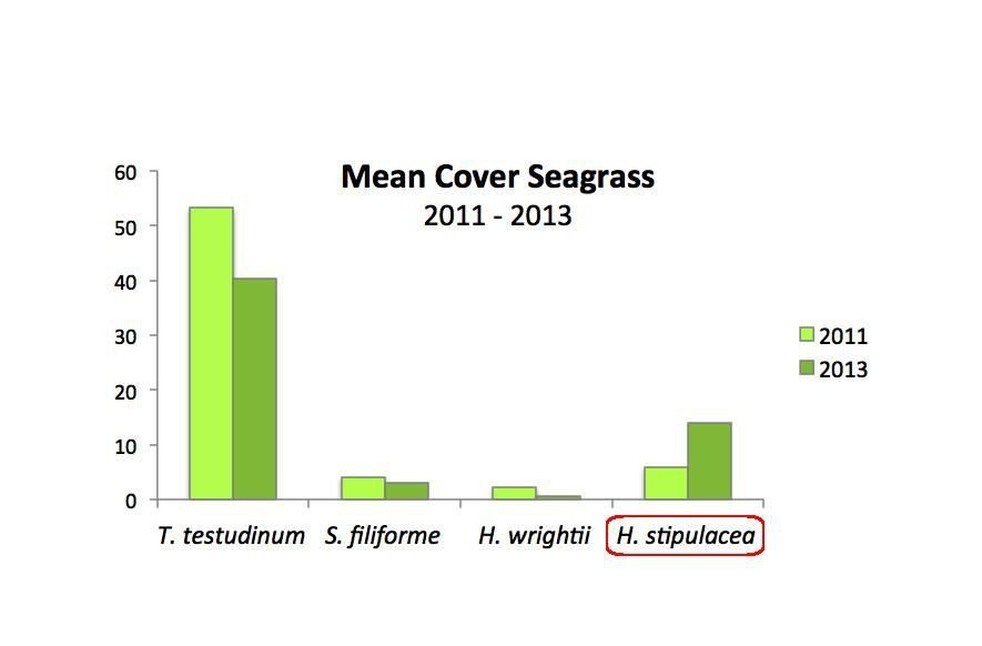 Mean cover four seagrass species in 2011 and 2013 (figure: DCNA)