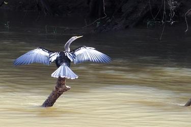 Reisverslag Costa Rica feb/mrt 2015