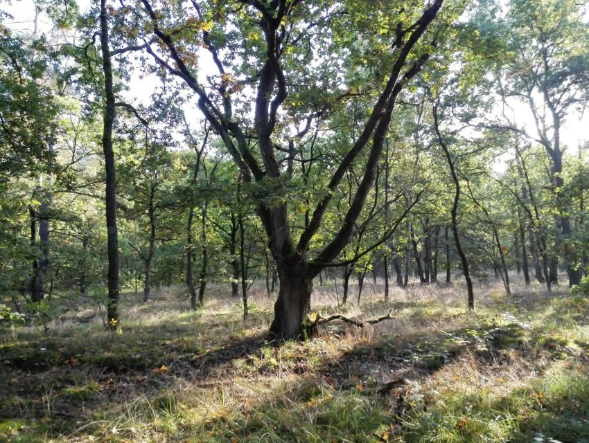 Natuurgebied Groene Delle