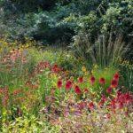 De natuurtuin zomer