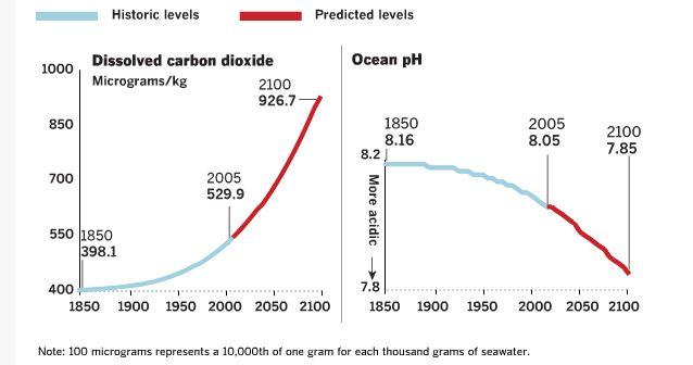 evolucion acidificación de los océanos