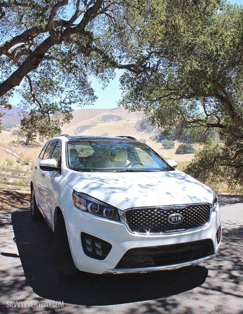 car under trees