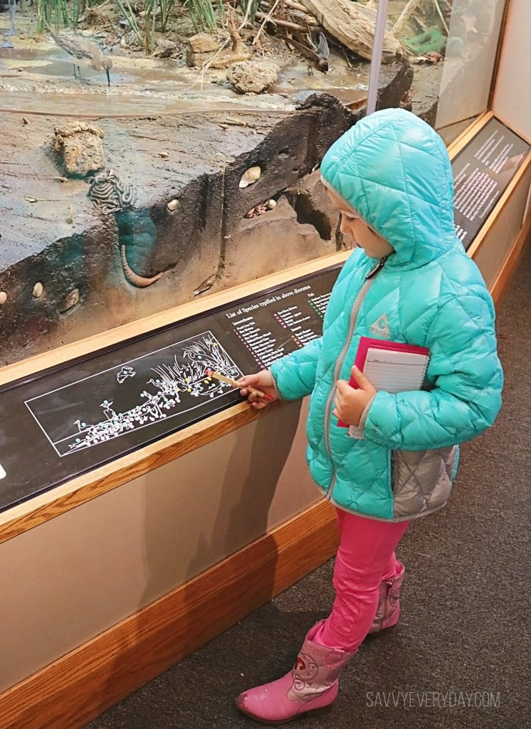 Looking at the marsh exhibit