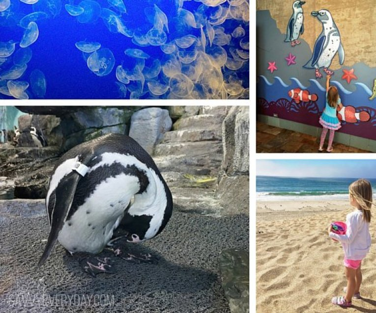 collage of aquarium activities