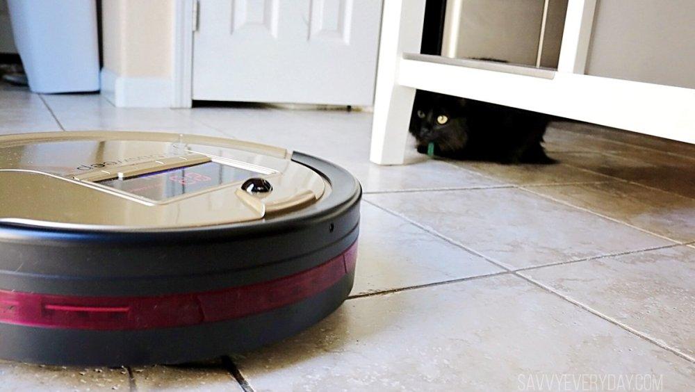 cat watching robotic vacuum