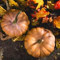 Gratitude or Platitude | The Navigators Evangelism Resource | Fall, thanksgiving spread of pumpkins and red and yellow leaves