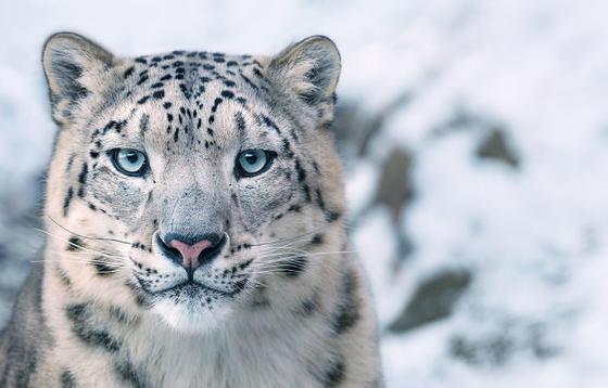 Я 2 года снимал редких вымирающих животных. Жаль, что вы их уже не увидите! Очень трогательно...