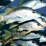 बुद्धिमान मछलियां और एकबुद्धि मेढक प्रेरणादायक कहानी