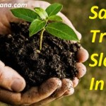 पेड़ बचाओ पर 25 बेस्ट स्लोगन ! Save Trees Slogans in Hindi