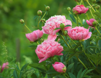 12 Plants that Beat the Summer Heat   Naylor Landscape Management The hottest days of summer can make your flowers fade and your plants  fizzle  Have no fear  we ve rounded up a dozen varieties that can take the  heat and